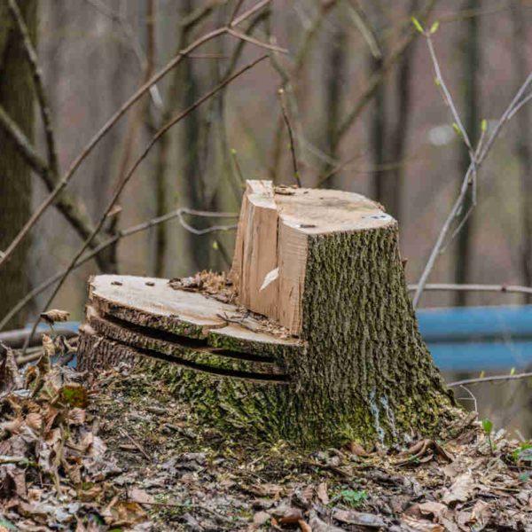 Baumfällung und Gartenpflege im Ruhrgebiet